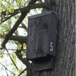 Štěrbinová budka pro netopýry.