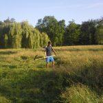 Luční plochy včásti Dno rybníka ponechané na pozdní ruční kosení.