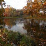 Doplněný systém rybníčků včásti Dno rybníka. Vodní plochy jsou místem, nad kterým netopýři intenzivně loví potravu i kam se létají napít.
