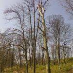 Torzo buku, nové výsadby a ponechaný ležící kmen (mrtvé dřevo pro hmyz) včásti Starý park.