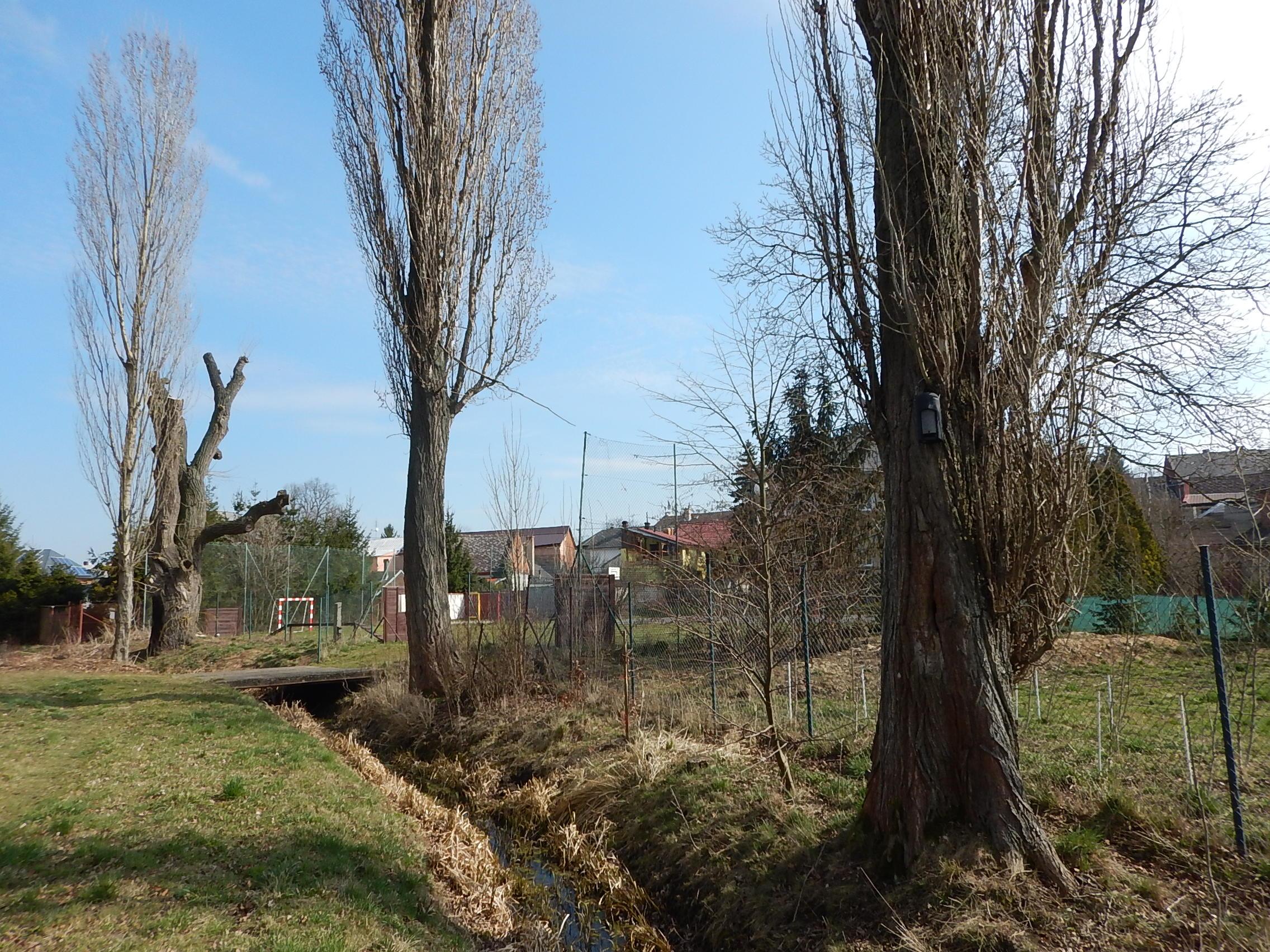 Celkový pohled na lokalitu – vzadu vrba s loggerem, vpředu topol s netopýří budkou.