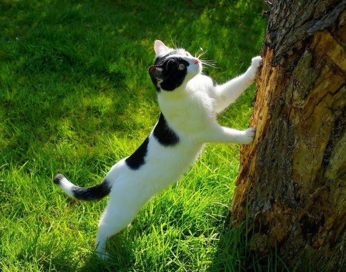 cat-1365643_1280