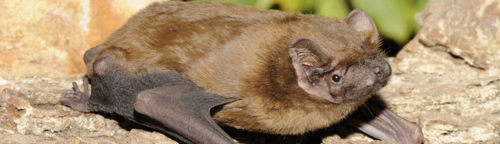 Ochrana netopýrů ve stromech