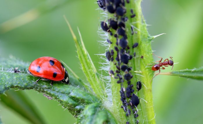 ladybug-1486479_1920