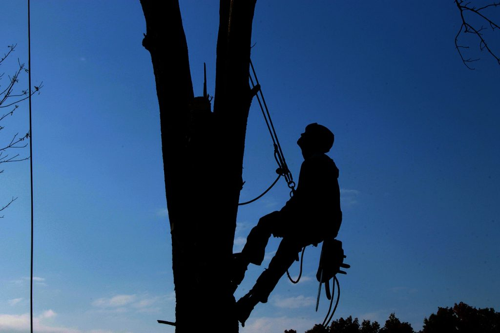 tree-service-1059484